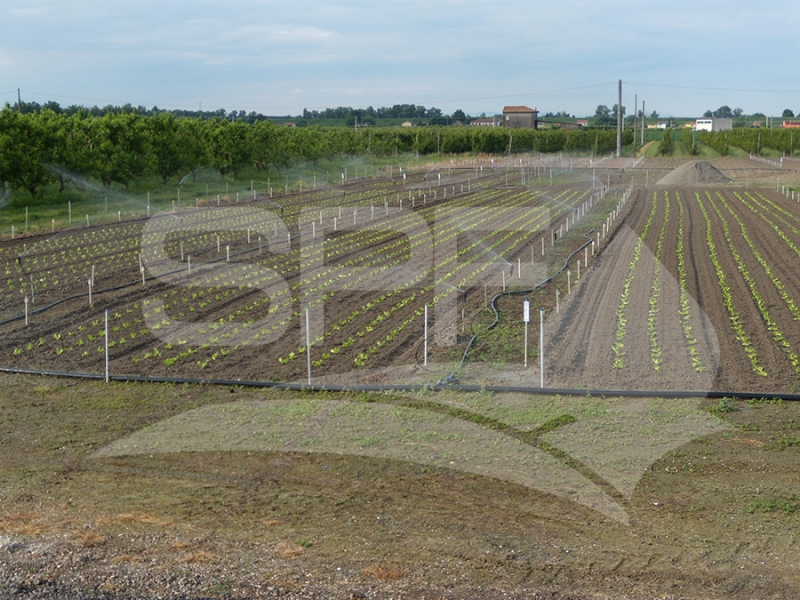 irrigaz-dissip-lattuga-residui-verifica-dissipazione