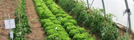 foto rotational crops