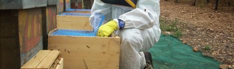 foto di studio di selettività su api
